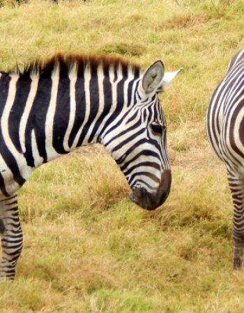Silverbell Safaris Ltd.